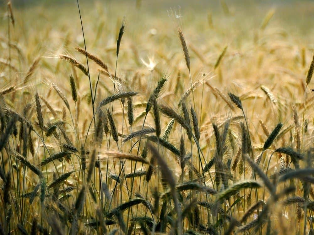 Biologische Beratung - Schädlingsbekämpfung in der Landwirtschaft 3