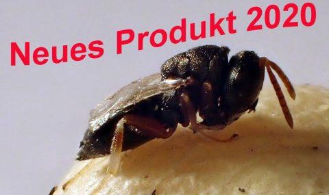 Bohnenkäfererzwespe Nützlinge online kaufen