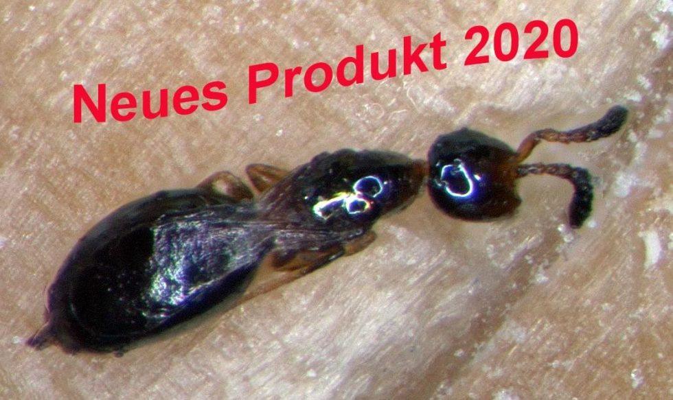 Nützlinge für Schädlingsbekämpfung in der Landwirtschaft